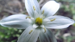 White Flower